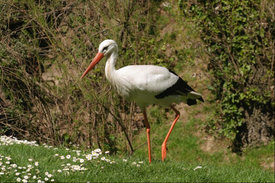 Ruta BirdFlyWay Ávila